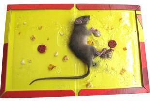 除四害产品粘鼠板